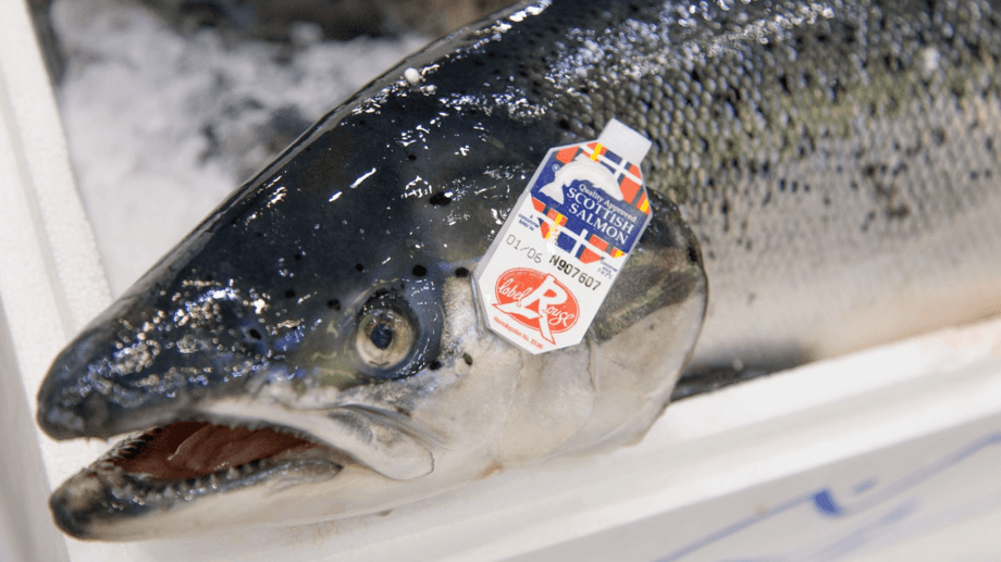 A Label Rouge Scottish salmon. Problems caused in exporting fish to the European Union following the end of the Brexit transition period have cost the industry £11m since January 1.