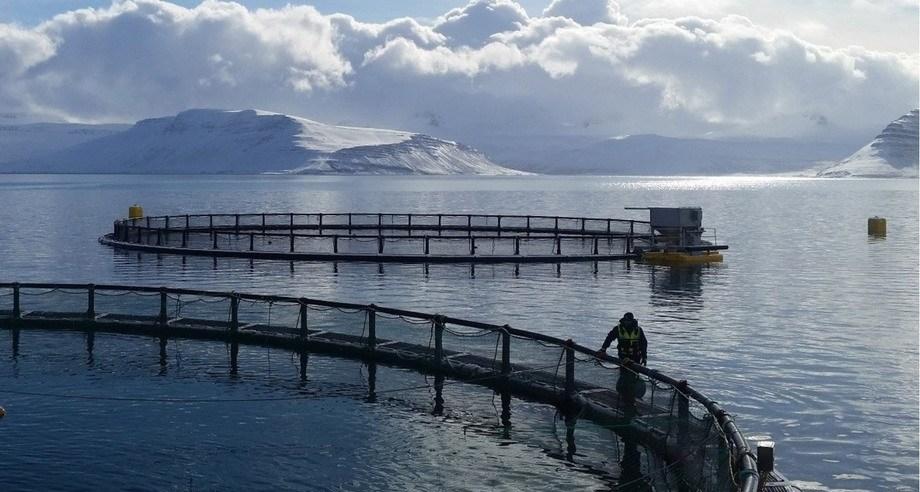 Icelandic Salmon pens. The company hopes to increase capacity by 7,000 tonnes. Photo: Icelandic Salmon.