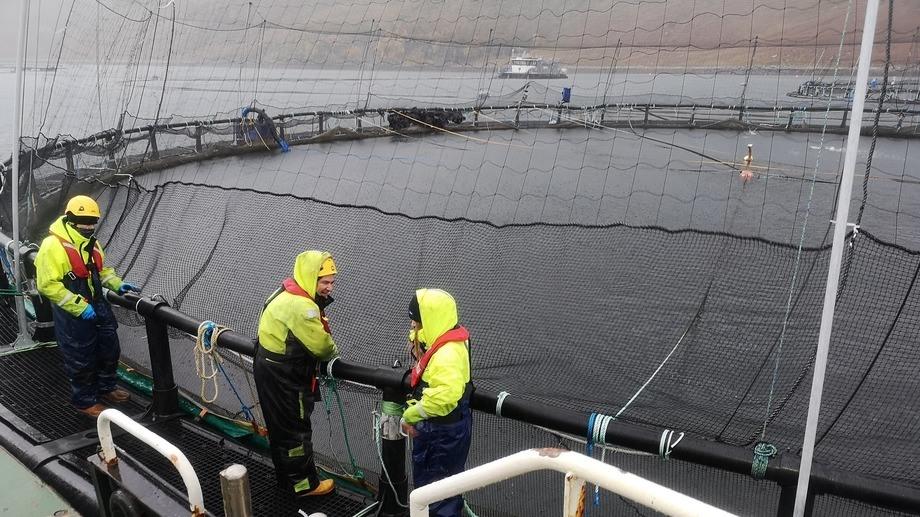 Salmon farmers at the cage edge in Scotland. The SSPO said 36 farms had taken advantage of SEPA dispensation to increase peak biomass limits. Photo: SSPO.
