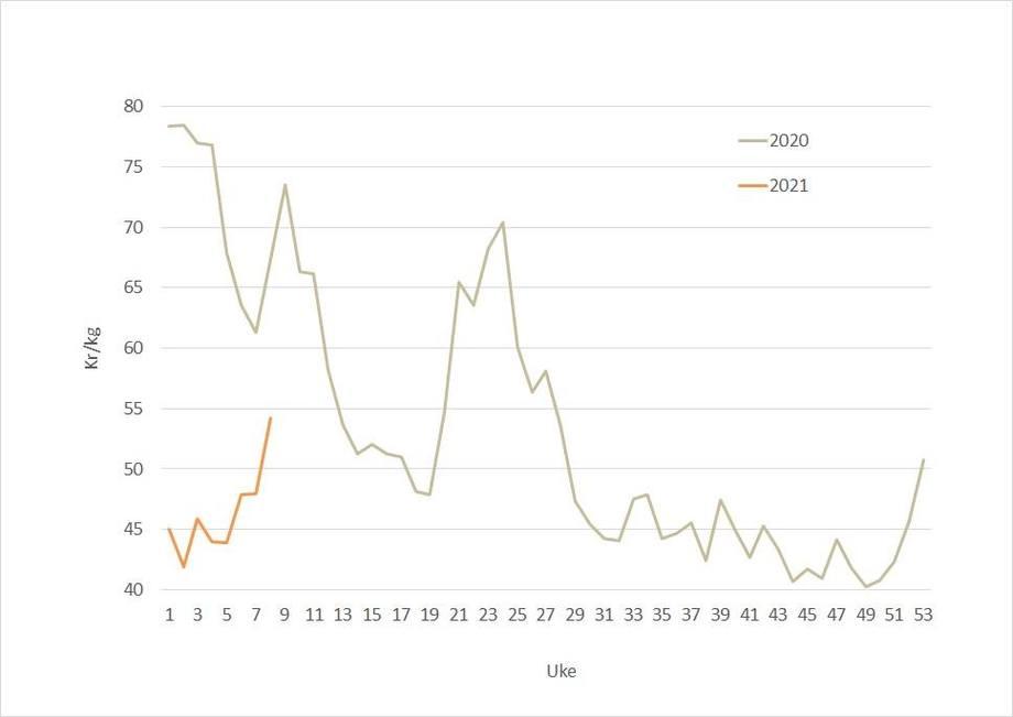 Spot price for Norwegian salmon in 2021 (orange) against 2020 (grey). Source: Akvafakta.
