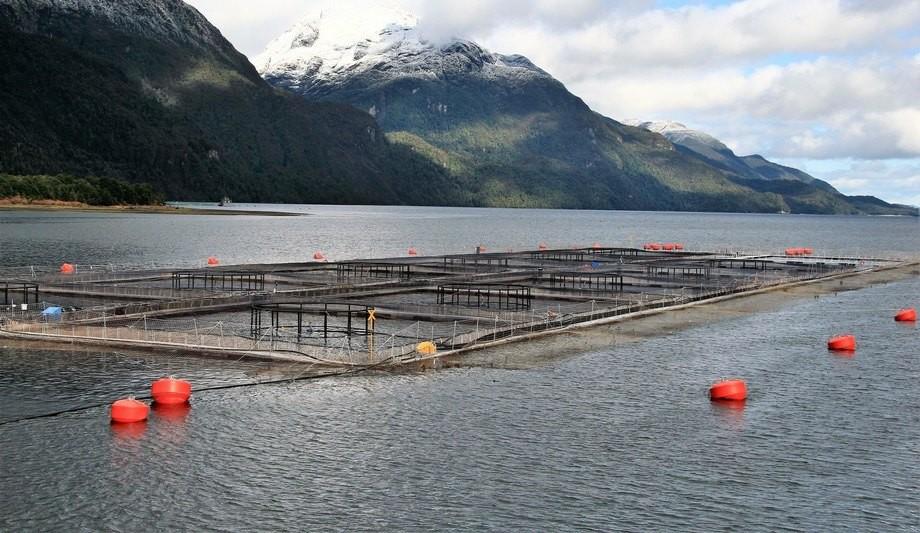 Salmonicultoras ya han obtenido sellos de reconocimiento al suscribirse al programa HuellaChile. Foto: Archivo Salmonexpert.