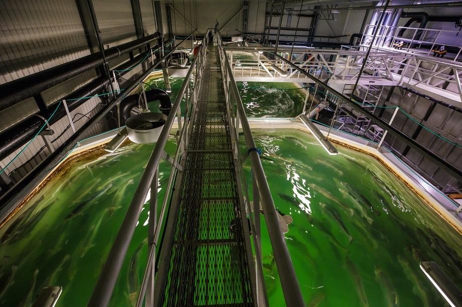 Lakseproduksjon i landbaserte resirkuleringsanlegg øker raskt i Norge. Praksisen rundt desinfeksjon slike anlegg er nå kartlagt, og resultatene kan brukes for å utvikle universelle retningslinjer som aktørene kan nyte godt av i årene fremover. Foto: Terje Aamodt, Nofima