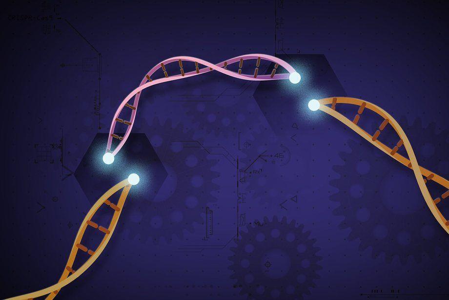 Las estrategias para aumentar la resistencia frente a esta bacteria puede centrarse en interrumpir su modulación de la homeostasis celular o en estimular los procesos inmunitarios que previenen o restringen la infección. Imagen: Ernesto del Aguila, NIH.