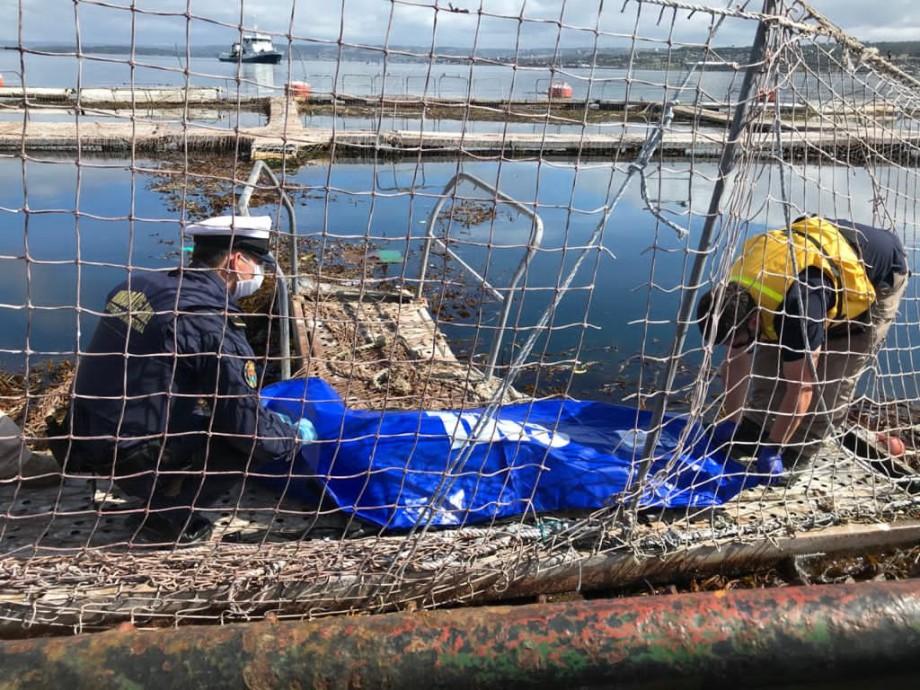 Armada levantando cádaver encontrado en instalación salmonicultora. Foto: Armada.