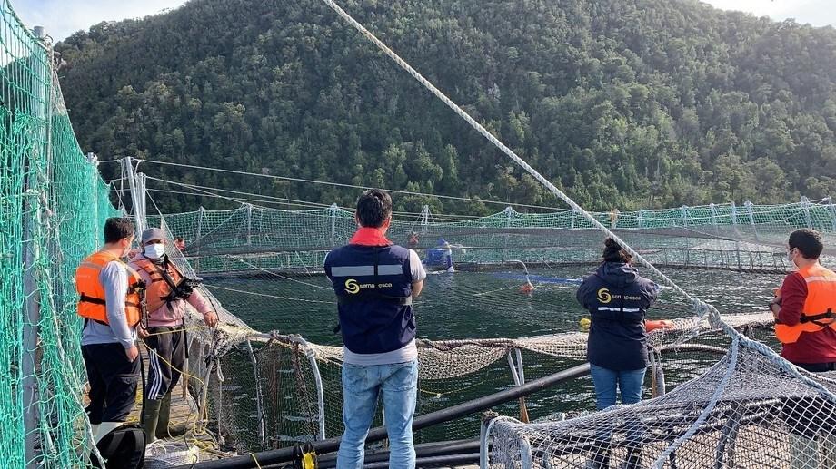Fiscalización de Sernapesca a centros de salmón afectados por eventos FAN. Foto: Sernapesca.