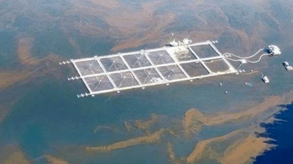 Harmful algal blooms have killed at least 4,244 tonnes of farmed salmonids in Chile. Photo: Diario Financiero.