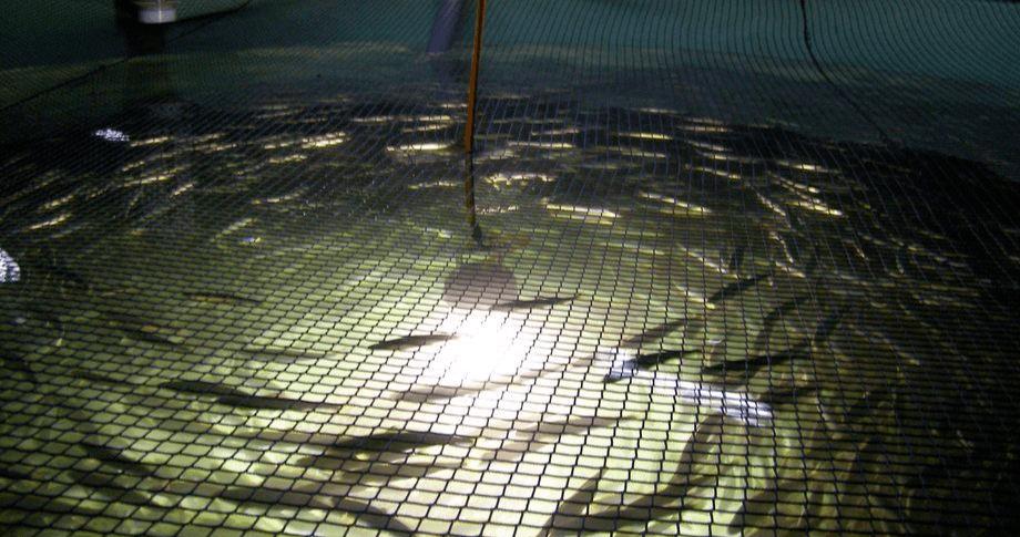 Imagen referencial de piscicultura. Foto: Archivo Salmonexpert.