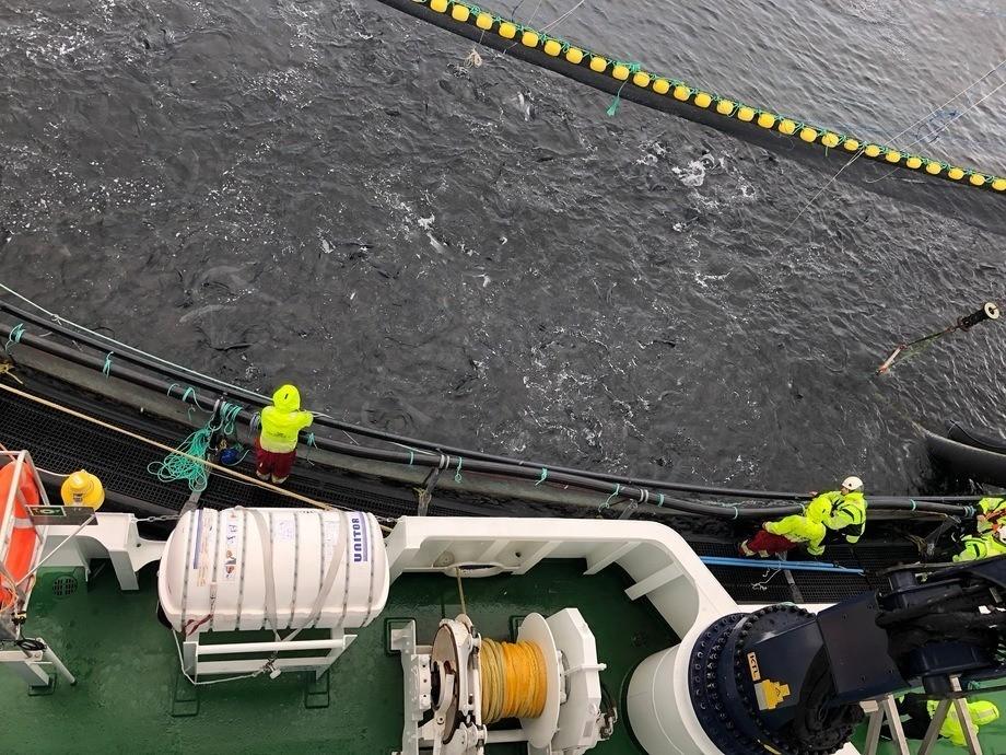 Imagen referencial de tratamiento térmico contra piojos de salmón. Foto: Archivo Salmonexpert.