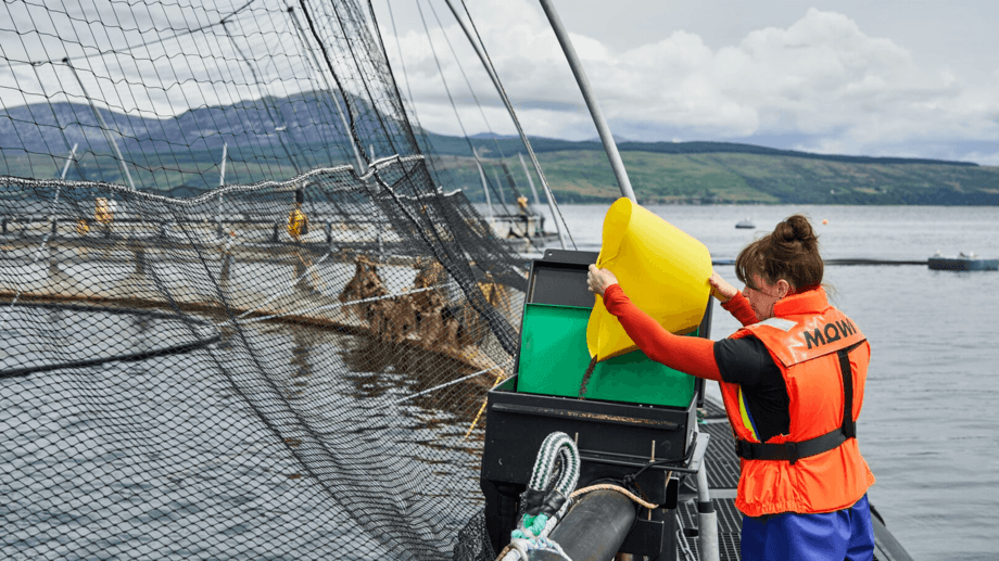 A farm technician at Mowi's Carradale site. Mowi harvested 18,500 tonnes of salmon in Q1, twice as much as in Q1 2020. Photo: Mowi.