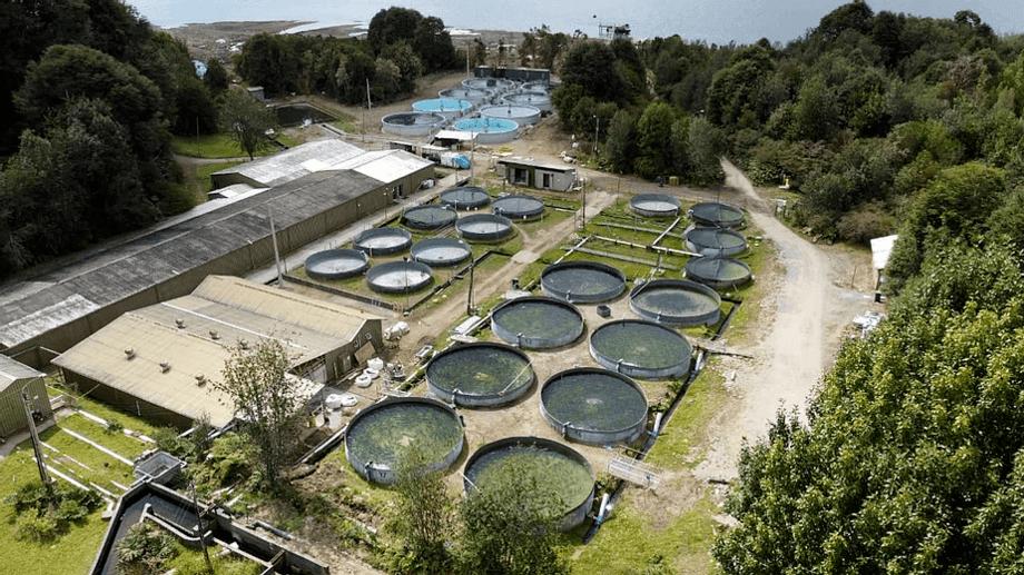 Piscicultura de AquaChile. Foto: AquaChile.
