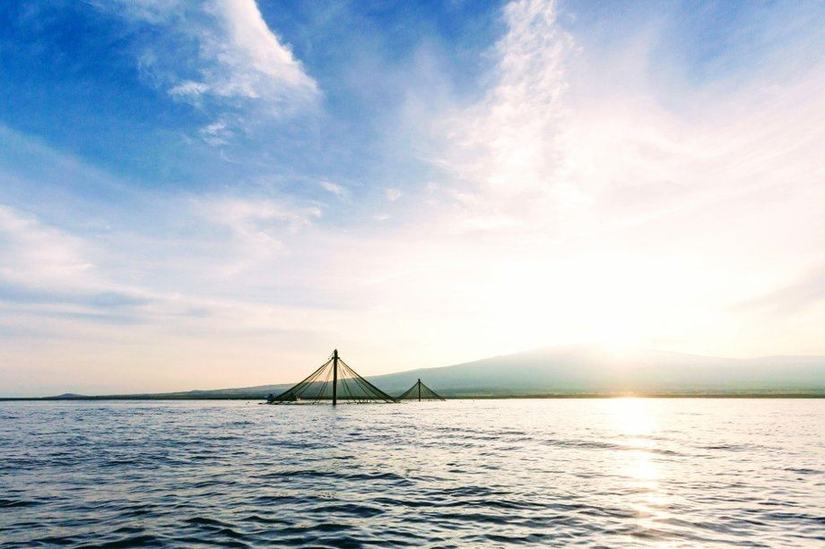 Innovasea desarrolla soluciones tecnológicas para la acuicultura. Foto: SalmonChile.
