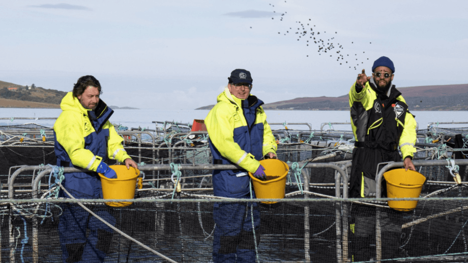 From left, chefs Shaun Rankin of Grantley Hall, John Quigley of Red Onion and James Cochran of 12:51 hand feeding fish at Wester Ross Salmon last autumn. Photo: SSPO.