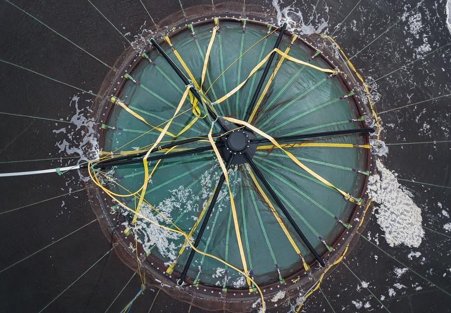 Atlantis på vei ned i dypet på lokaliteten Otervika med 170 000 fisk. Foto: Tina Oldham/Havforskningsinstituttet.