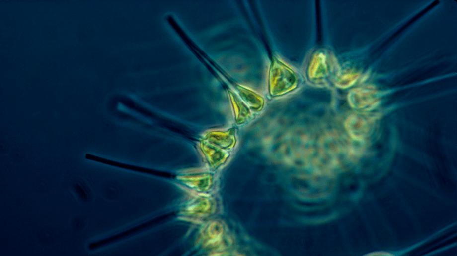 OTAQ está desarrollando un sistema que dará a los salmonicultores una alerta temprana para floración de algas y plancton. Foto: Archivo Salmonexpert.