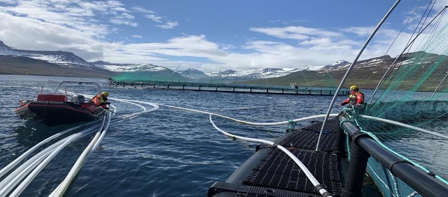 Hovedårsaken til redusert EBIT er lavere salgspriser på kontrakter på grunn av ugunstig utvikling av valutakursen sammenlignet med 1. kvartal 2020. Foto: Ice Fish Farm