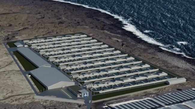 An illustration of the Samherji salmon farm to be sited next to a geothermal power station. The facility will use warm water from the power station that would otherwise go straight back into the sea. Illustration: Samherji.