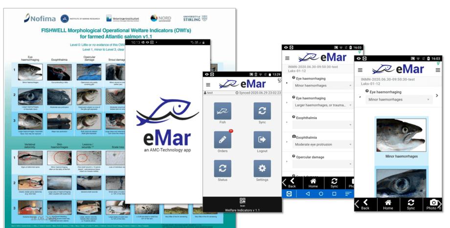 Observasjon av fisk ved uttak. Nå kan skal en app utvikles som elektronisk scoringsskjema. Foto: UiB