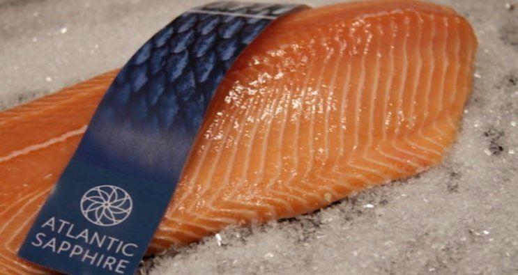Atlantic Sapphire obtuvo ingresos de $ 11 por kilo de cosecha total en los EE. UU. Foto: Atlantic Sapphire.