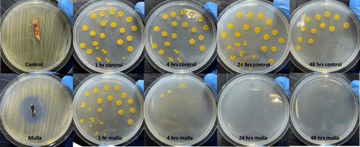 ADL Diagnostic Chile constata que  tecnología V2 de Garware tiene componentes que poseen un efecto antibacteriano activo frente a Piscirickettsia salmonis y Tenacibaculum dicentrarchi, registrando un 100% de eficacia a las 24 hrs. Se aprecian los resultados para control malla HDPE y malla Garware V2 sobre T. dicentrarchi tras 1-4-24-48 horas de exposición.