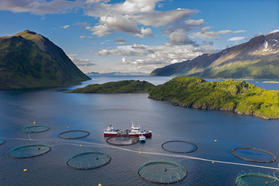 NTS ASA ønsker ikke å selge seg ned i Norway Royal Salmon. Illustrasjonsfoto: NTS