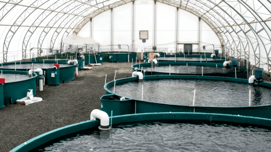 Inside Taste of BC Aquaculture, which currently has capacity for 80 tonnes of steelhead salmon but aims for 21,000 tonnes by 2028. Photo: Taste of BC Aquaculture / Blue Star Foods.