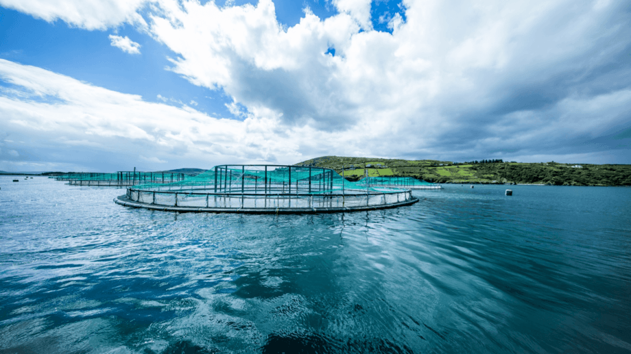 A salmon farm at Lough Swilly, Co. Donegal, Ireland. The county's aquaculture sector is expanding beyond primary production and developing industry-leading technologies, says seafood development agency BIM. Photo: Mowi Ireland.