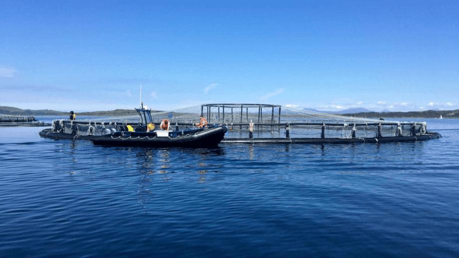 Inspección sanitaria de peces en el centro BDNC de Mowi Escocia. Foto: Mowi.