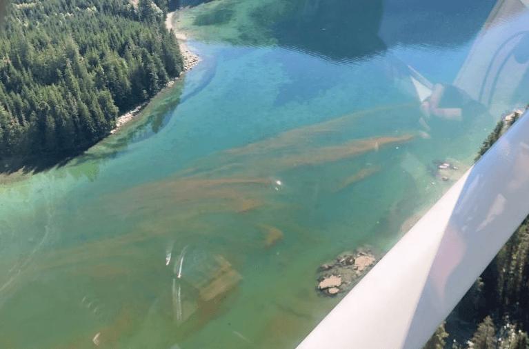 Foto aérea de una floración algal tomada por el equipo de soporte de calidad del agua de Mowi Canadá Oeste. Foto: Mowi.