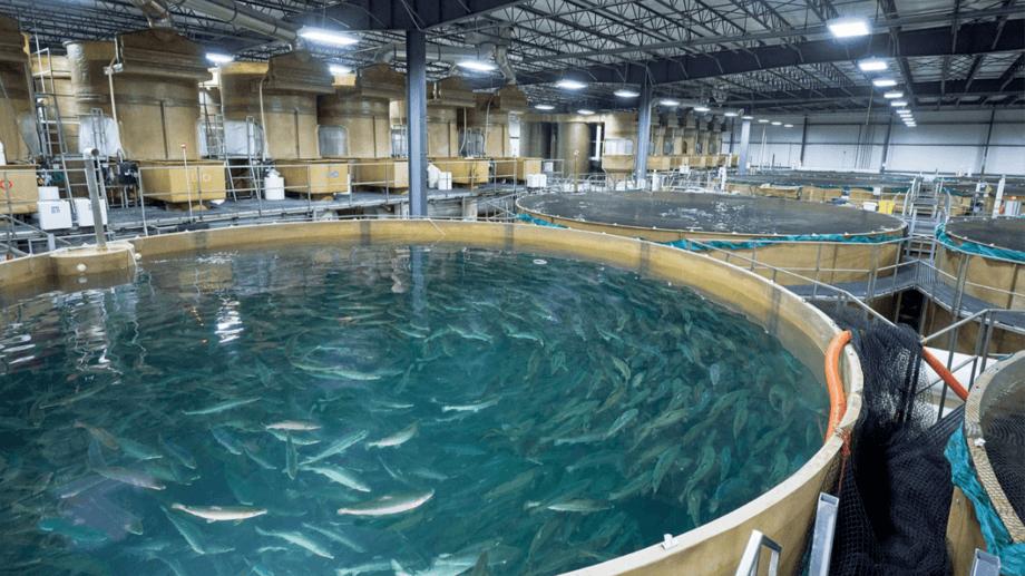 Grow-out tanks at AquaBounty's facility in Albany, Indiana. Photo: AquaBounty.