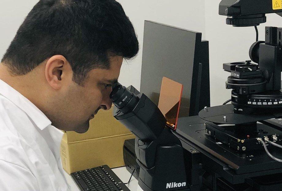 Hovedfunnene inkluderer identifisering at både stamceller for røde blodceller og makrofager i nyrene er viktige virusreservoarer og virusprodusenter i persistent PRV-1-infeksjon. Foto: NMBU
