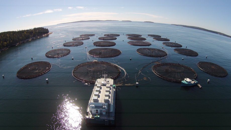 Cooke's Black Island South site in Maine, where 87,607 fish died in a mass mortality event in August. Photo: Cooke Aquaculture US.