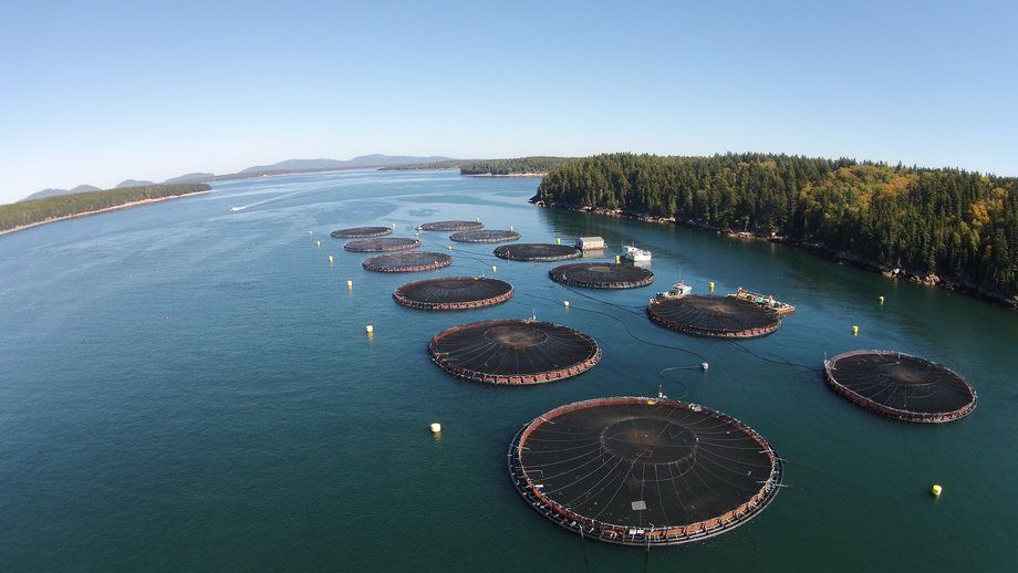 A Cooke Aquaculture site in Maine. The state's Department of Environmental Protection is investigating a die-off at the company's Mount Desert Island site, which Cooke says was caused by an isolated issue of low dissolved oxygen. Photo: Cooke.