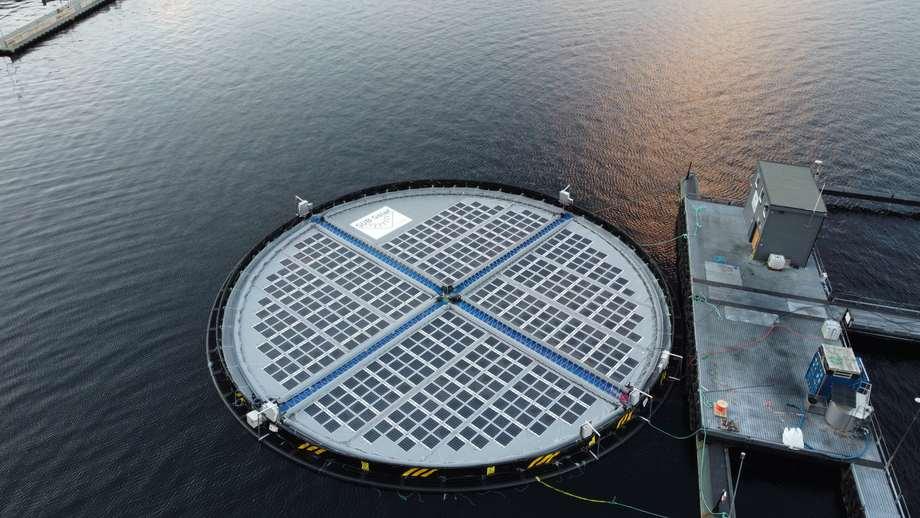 Inseanergy ha desarrollado una planta de energía de células solares flotantes que entregará energía verde de producción propia y 100% libre de emisiones a las balsas en los centros de peces. Foto: Inseanergy.