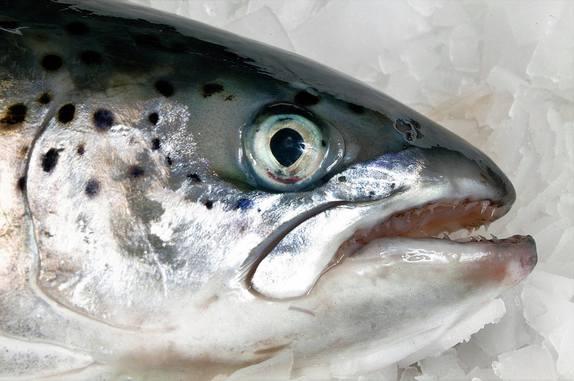 Precio del salmón noruego cae 7% en una semana