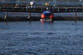 Aqua Robotics inngår avtale med Mowi