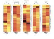 <p>Heat map de intestino en peces alimentados con las dietas experimentales durante el experimento 1, previo (A) y 72 h post desaf&iacute;o de estr&eacute;s (B).</p>