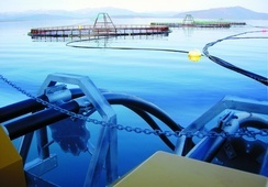 AKVA group vokser i sjø, men på land går det tregere