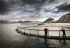 Bakkafrost ønsker å gå offshore