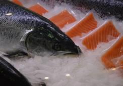 Skotsk laks blir utkonkurrert i inn- og utland