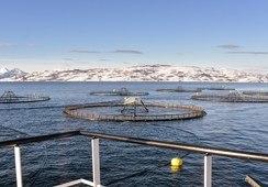- Mange lokaliteter har hatt fisk i sjøen et knapt år uten å avluse