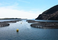 AKVA completes deal to buy Newfoundland rival