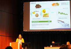 GMO-camelinaolje kan trygt erstatte fiskeolje