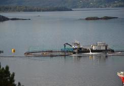 Bedret kontroll med lus - men avlusningsmetodene gir store fiskehelseutfordringer