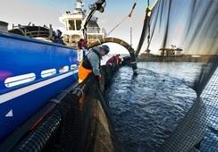 Nytt krav kan endre transport med brønnbåt