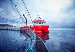 Måsøval: Vi er i dialog med myndighetene om erstatning