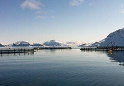 Stor rapport om havbruksnæringen