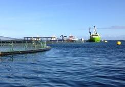 Acusación de Greenpeace: Gobierno y gremio afirman que descargas son legales