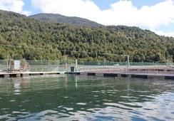 Subpesca fija densidad de cultivo para concesiones de acuicultura de Trusal