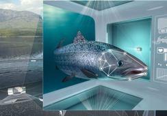Cermaq builds welfare policy on FishWell framework