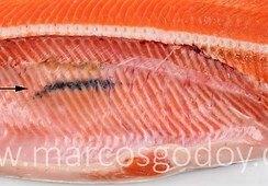 Describen Melanosis muscular asociado a fractura de espinas en salmón coho